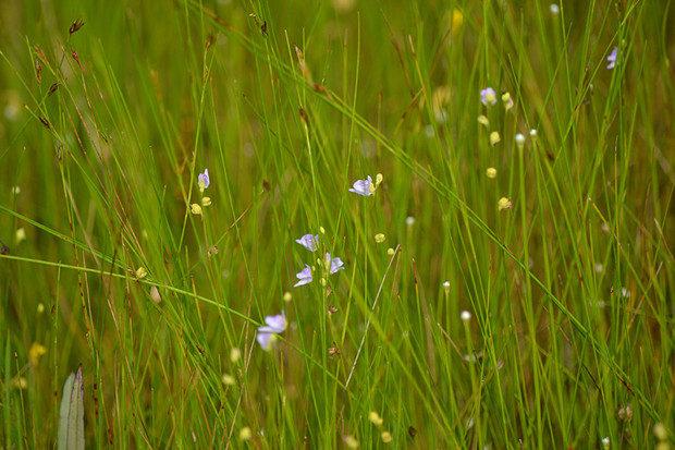 板山高根湿地