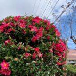 愛知県のホームページ制作会社・庭の風景